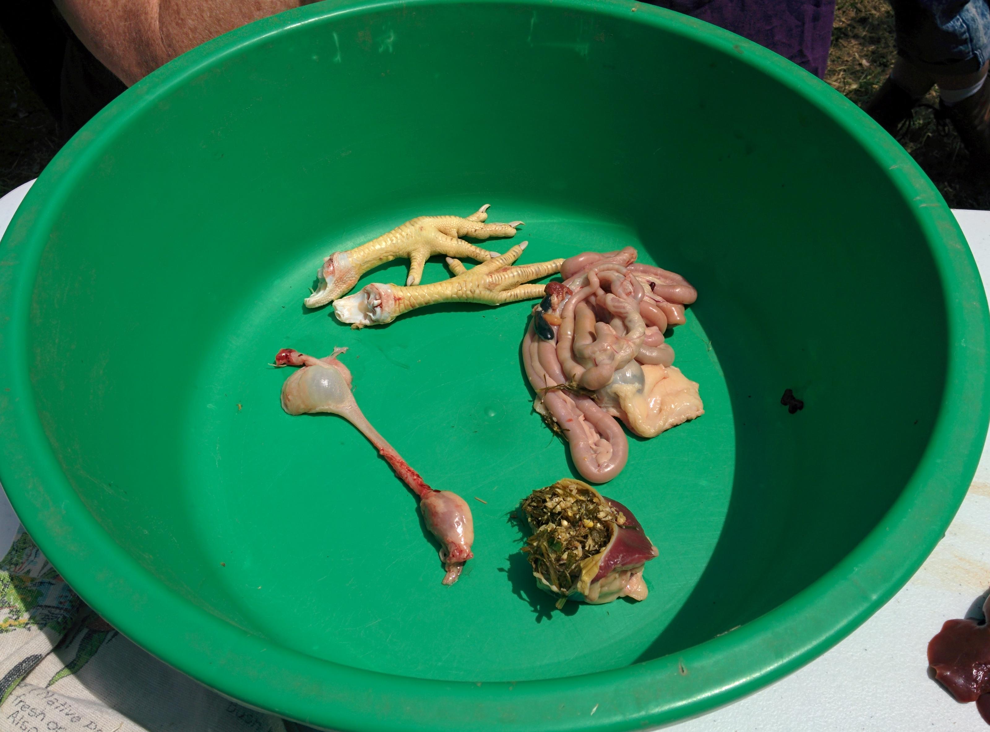 Chicken organs.